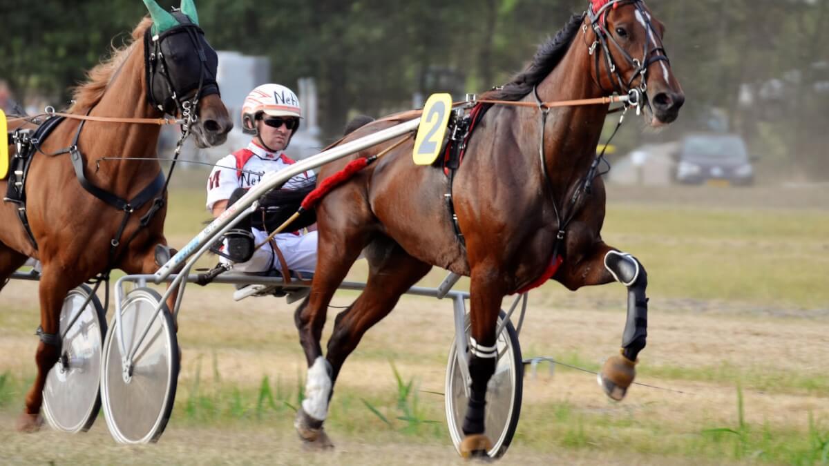 Kända svenska travhästar genom tiderna