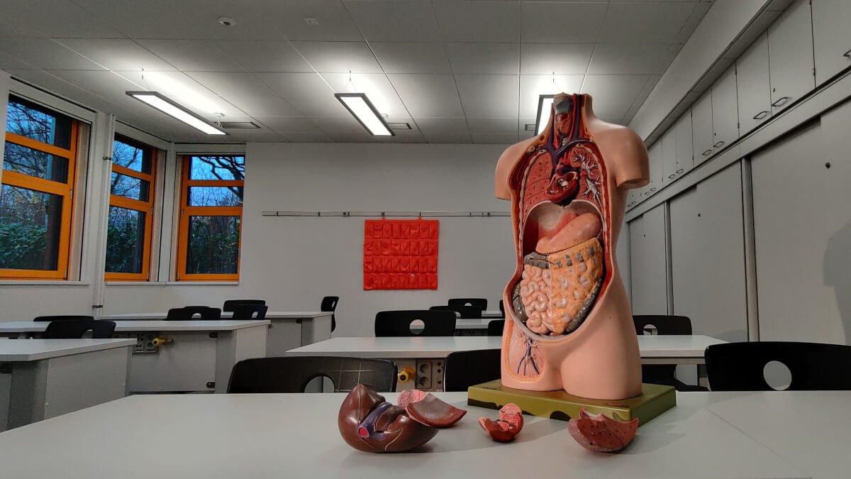 Kroppens största organ