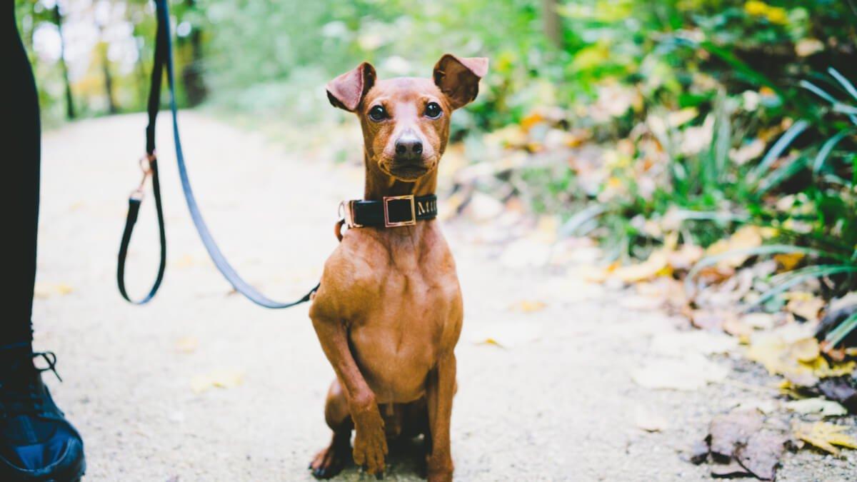 Vanligaste hundnamnen i Sverige 2020