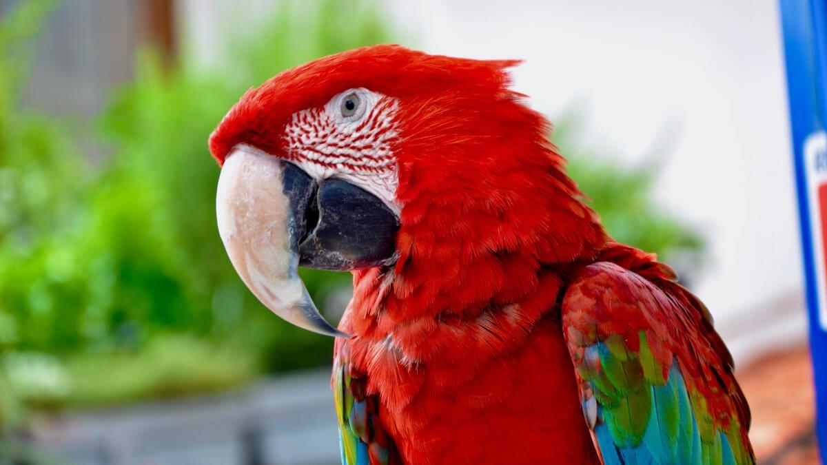 Världens största fåglar